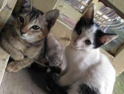 Pair Of Kittens Available