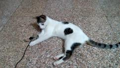 10 Months Old gentle loving kitten for free adoption Available