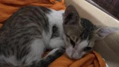 1 Month Old Kitten Available