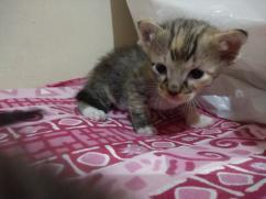 Cute kittens are up for free adoption (Rs.0)