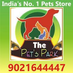 DOG PUPPIES  PERSIAN KITTEN THE PETS PARK 9021644447