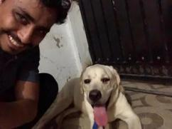 i want to sell my dog 6 month old labrador with KCI certificate - Ahmedabad