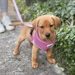 Cute and lovely puppy