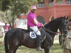 SUPERB PURE BLACK HORSE BLACK KING