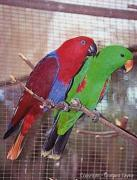 Exotic birds and parrots