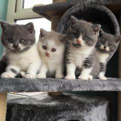Lovely male and female kittens ready for a new family