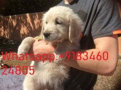 Puppies for adoption near me.