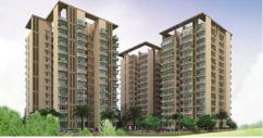 Lotus Homz Affordable Apartmaent In Gurgaon 111