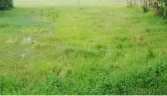 land for sale at domjur