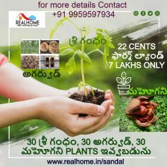 22 cents Sandalwood Plantation Plots in Addanki,Prakasam district for 6.5 lakhs