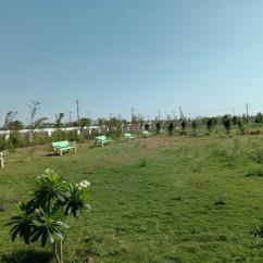 Suchir IVY Green