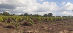 Farm Plots