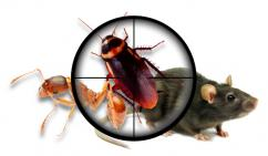 Best pest services in Chennai