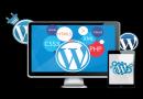 Wordpress Freelancer Developer In Noida, Greater Noida, Delhi