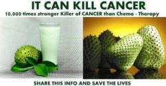 CANCER CURING leaves of GRAVIOLA for SALE