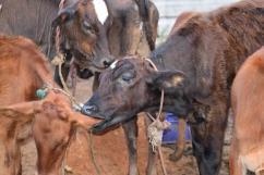 Organic Milk Chennai